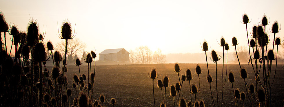 The Lonely BarnNovember 22, 2012 / View Photo